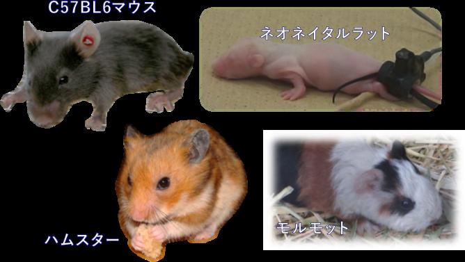 Animal_MK2000
